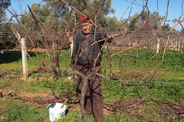 Meyve Ağaçlarında Budama, Aşılama ve İlaçlama Semineri