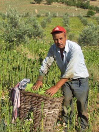 Bir Zamanlar Türkiye'nin Tütün Ambarı Sındırgı'da Tütüncülük (2)