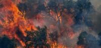 sındırgıda orman yangını (2)