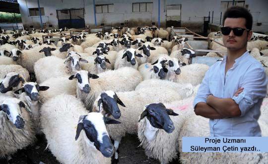 Türkiye Damızlık Koyun Irkları ve Yetiştirildiği Bölgeler